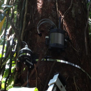 SFM1 Sap Flow Meter and Dendrometer