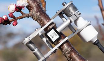 DPV40 Pivot Stem (Voltage) Dendrometer